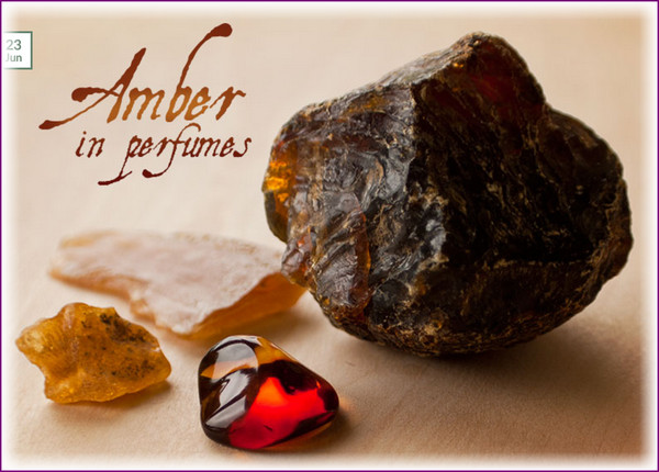 Labdanum resin is the most popular and most recognizably amber. Other resins often used are benzoin, balsam of peru, frankincense, myrrh