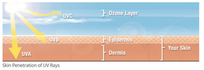 UV Light penetration in the skin
