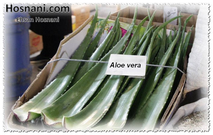 aloe vera leaves in bazar