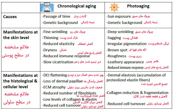 chronological&photoaging