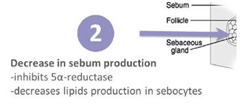 decrease in sebum production