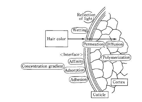 diagram of hair coloring process