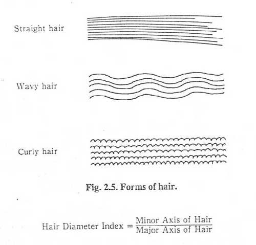 hair forms