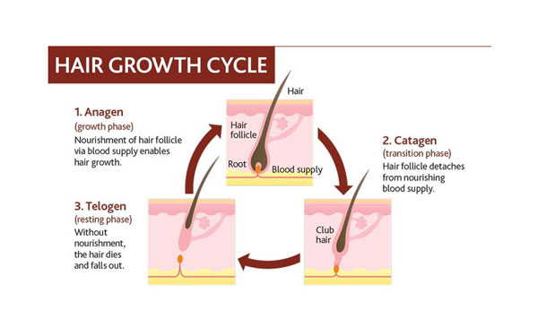 hair growth cycle og