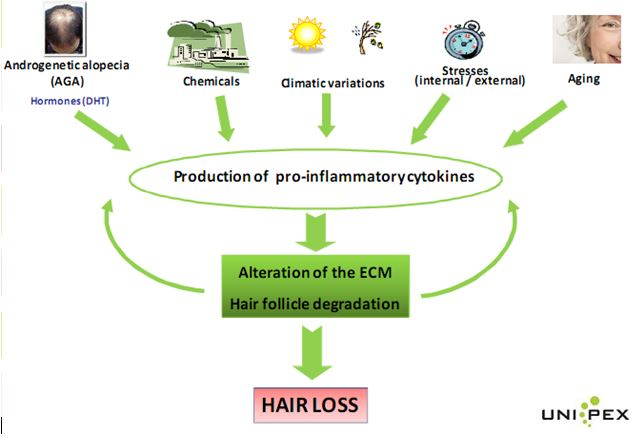 hairloss factors