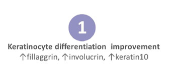 keratinocyte differentiation improvement