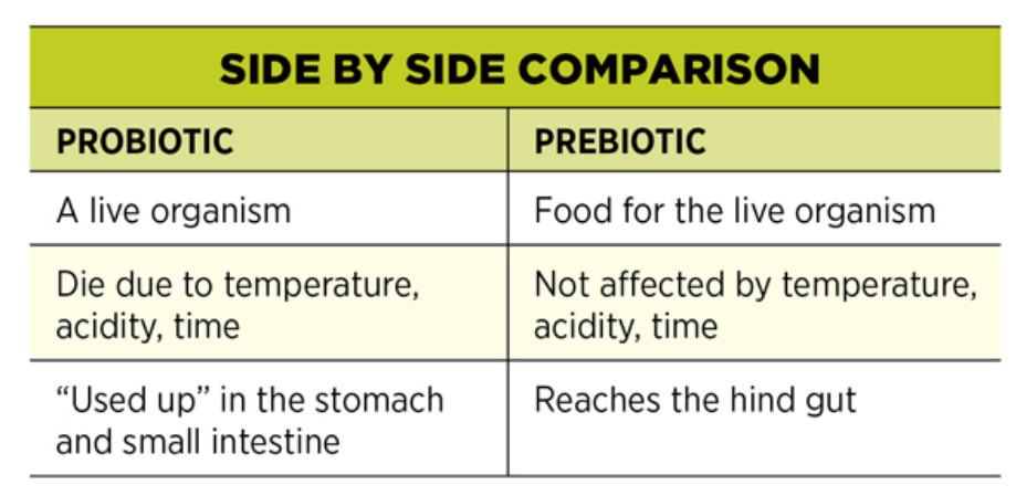 prebiotic vs probiotics2