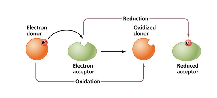 redox Any such reaction involves both a reduction process and a complementary oxidation process, two key concepts involved with electron transfer processes