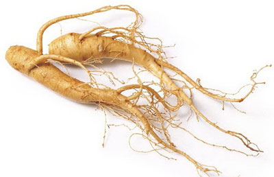 vocabulary ginseng og