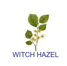 whitch hazel